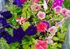 Цветы садовые фото 4