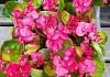Цветы садовые фото 7