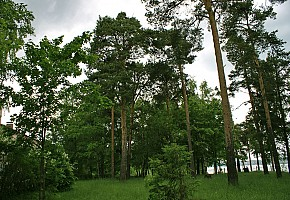 Профилакторий «СПА-ВОЛГА» фото 3
