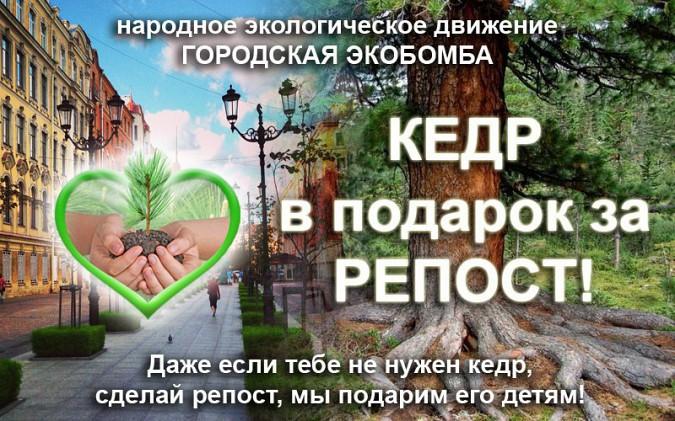 Жители Ивановской области могут присоединиться к «ЭКОбомбе» и получить саженец кедра фото 2
