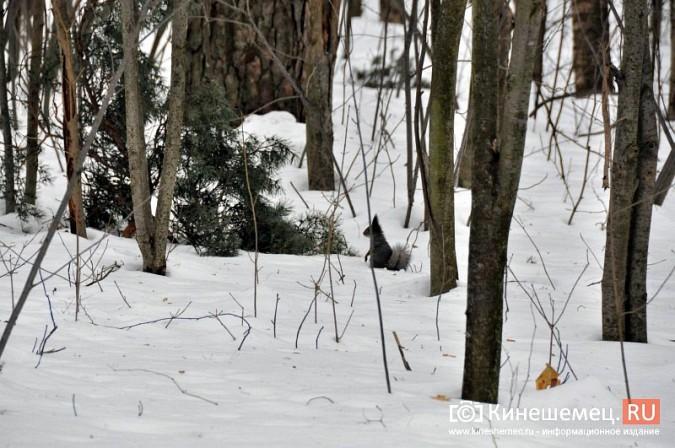 Кинешемский марафон собрал более 300 лыжников Ивановской области фото 60