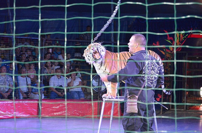 Цирк-шапито «Пегас» в Кинешме фото 21