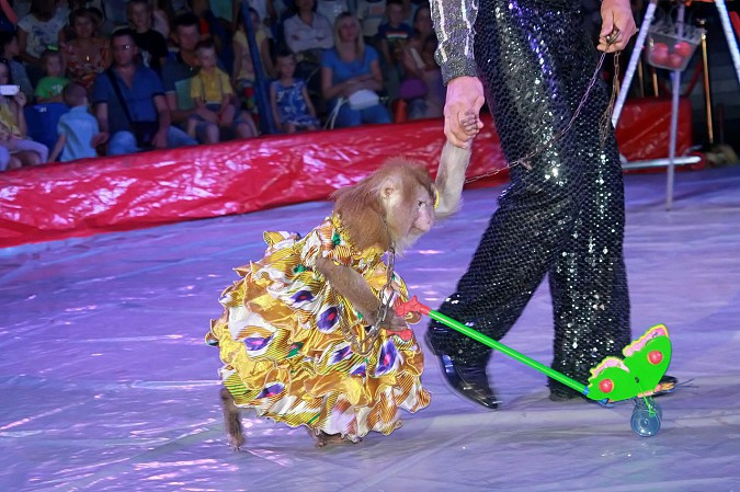 Цирк-шапито «Пегас» в Кинешме фото 13