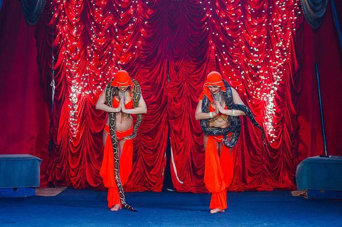 Цирк-шапито «Пегас» в Кинешме фото 6