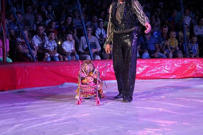 Цирк-шапито «Пегас» в Кинешме фото 12