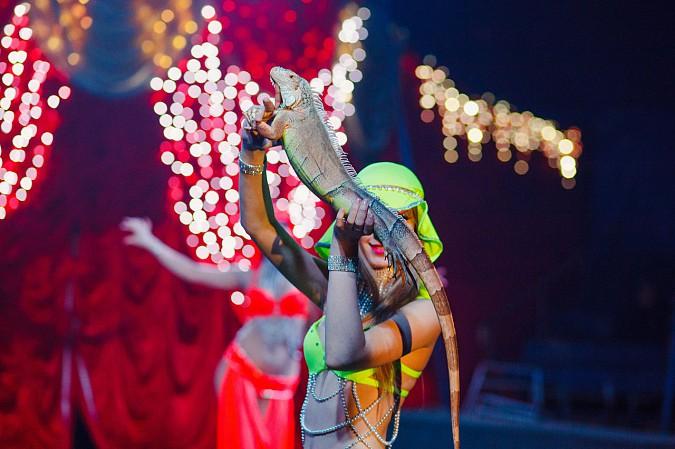 Цирк-шапито «Пегас» в Кинешме фото 14