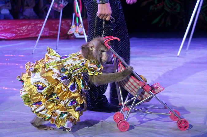 Цирк-шапито «Пегас» в Кинешме фото 10