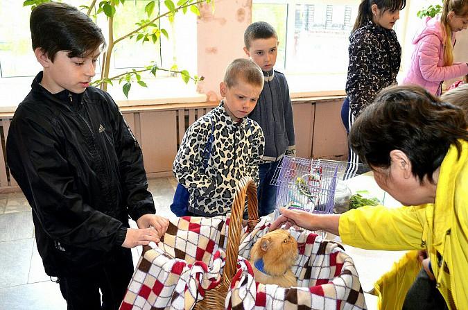 В Наволоках пройдет конкурс на лучшего домашнего питомца фото 2
