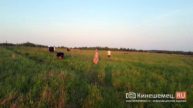 Кинешемские чиновники вынудили многодетную семью забить корову - кормилицу фото 14