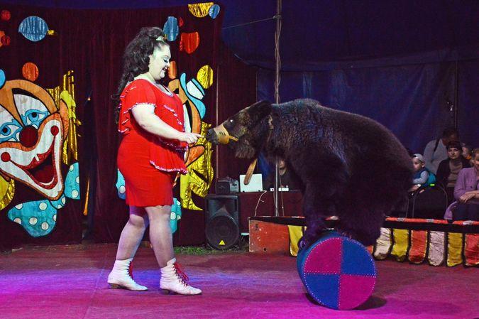 Сибирский цирк «Шапито» приглашает Кинешемцев фото 4