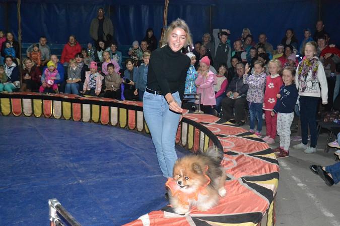 Сибирский цирк «Шапито» приглашает Кинешемцев фото 24