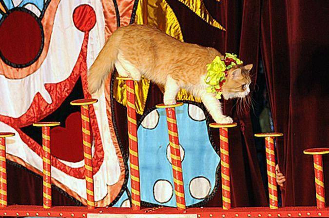 Сибирский цирк «Шапито» приглашает Кинешемцев фото 6