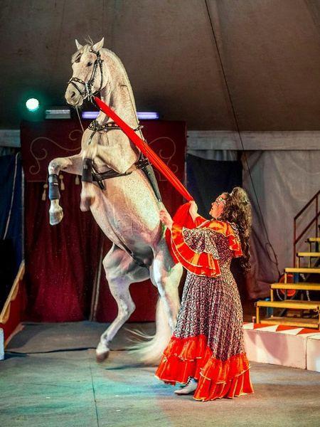 Сибирский цирк «Шапито» приглашает Кинешемцев фото 16
