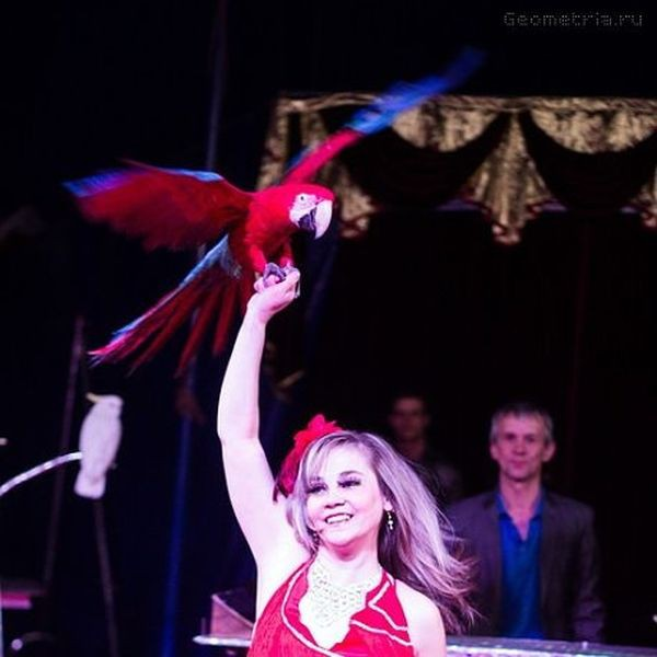 Сибирский цирк «Шапито» приглашает Кинешемцев фото 20