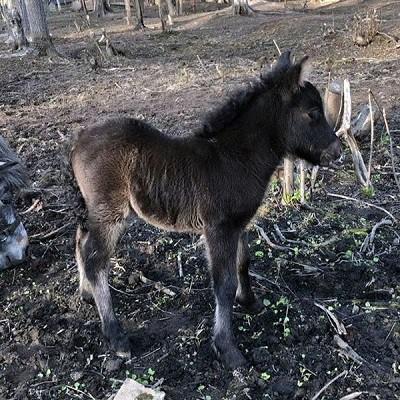 Парк животных близ Кинешмы фото 3