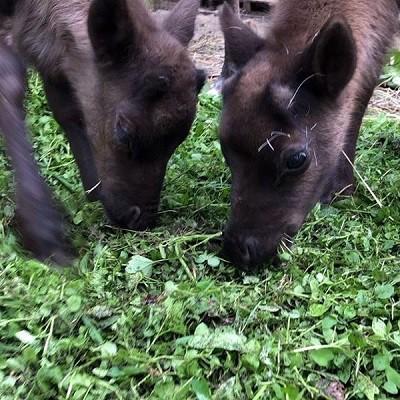Парк животных близ Кинешмы фото 7