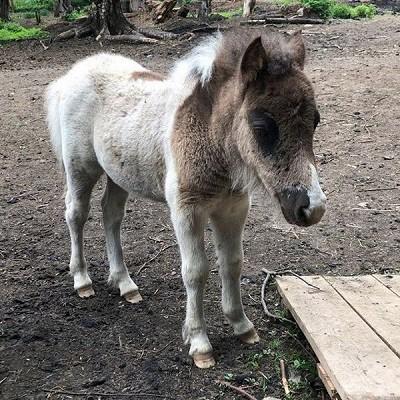 Парк животных близ Кинешмы фото 10