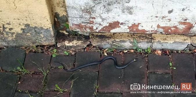 На центральные улицы Кинешмы выползли змеи фото 2