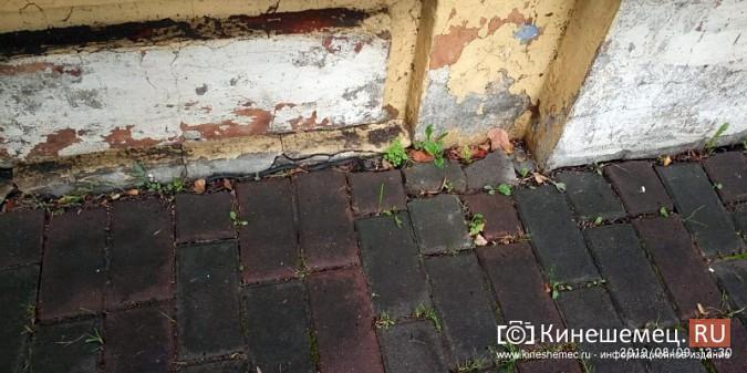 На центральные улицы Кинешмы выползли змеи фото 3