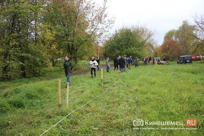 500 сосен высадили в сквере на улице Гагарина фото 15