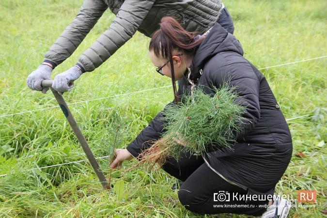 500 сосен высадили в сквере на улице Гагарина фото 12