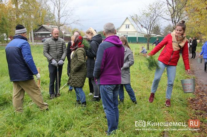500 сосен высадили в сквере на улице Гагарина фото 18