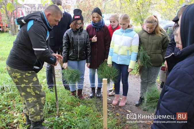 500 сосен высадили в сквере на улице Гагарина фото 11