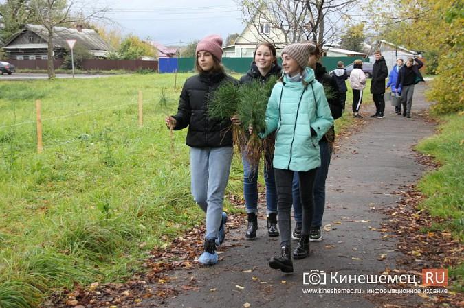 500 сосен высадили в сквере на улице Гагарина фото 17