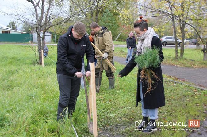500 сосен высадили в сквере на улице Гагарина фото 13
