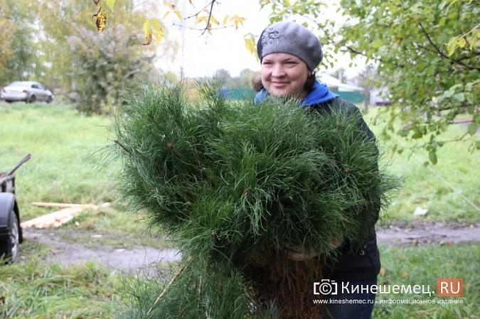 500 сосен высадили в сквере на улице Гагарина фото 3