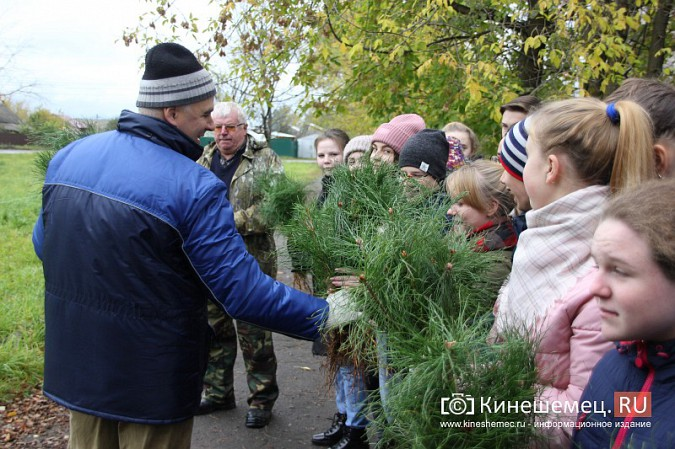 500 сосен высадили в сквере на улице Гагарина фото 5