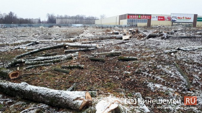 На «Лесозаводе» строители устроили лесоповал при возведении торгового центра фото 9