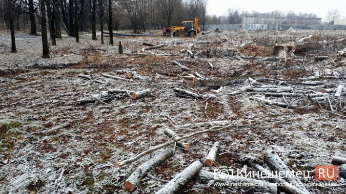 На «Лесозаводе» строители устроили лесоповал при возведении торгового центра фото 4