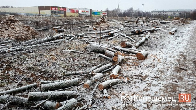 На «Лесозаводе» строители устроили лесоповал при возведении торгового центра фото 3