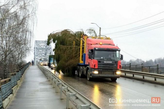 В Кинешму привезли главную новогоднюю елку фото 7