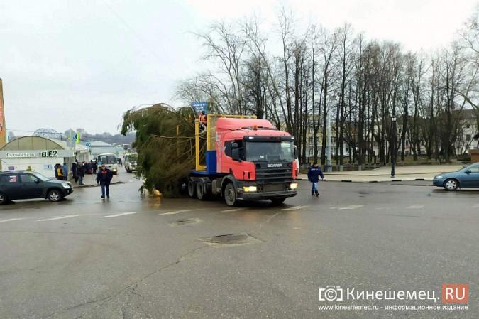 В Кинешму привезли главную новогоднюю елку фото 11