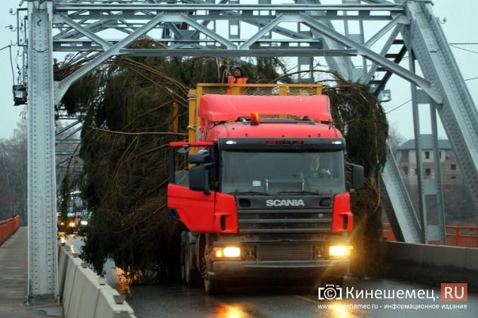В Кинешму привезли главную новогоднюю елку фото 6
