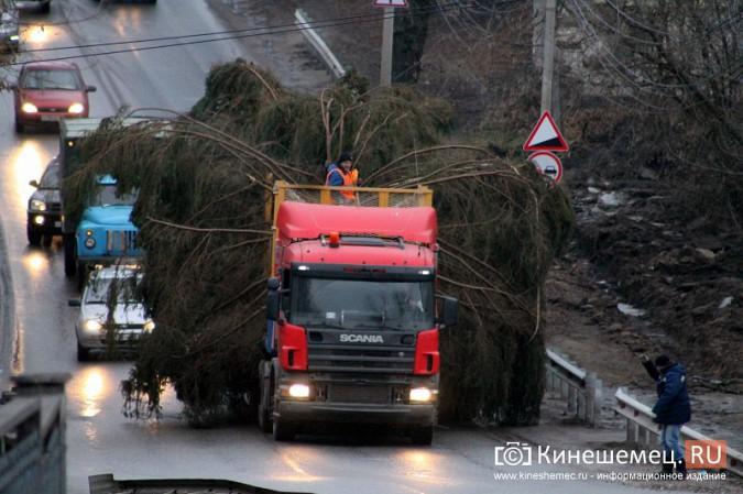 В Кинешму привезли главную новогоднюю елку фото 3
