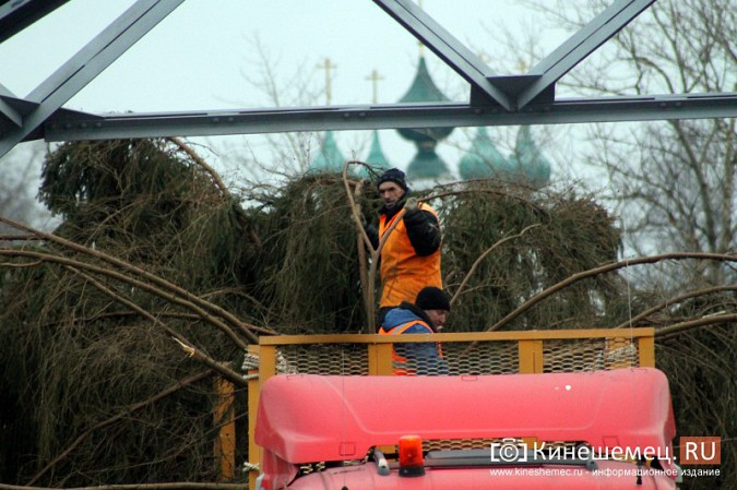 В Кинешму привезли главную новогоднюю елку фото 4