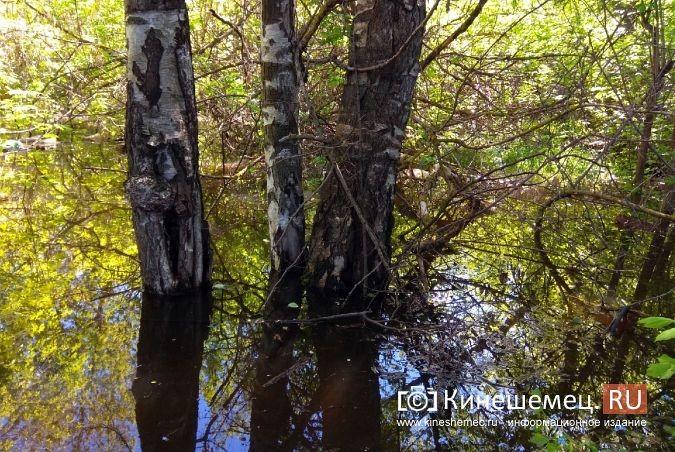 Территория рядом с Никольским мостом уходит под воду фото 12
