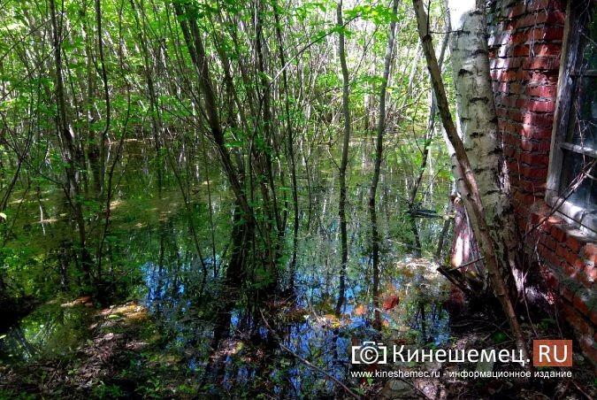 Территория рядом с Никольским мостом уходит под воду фото 11