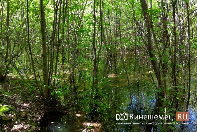 Территория рядом с Никольским мостом уходит под воду фото 4