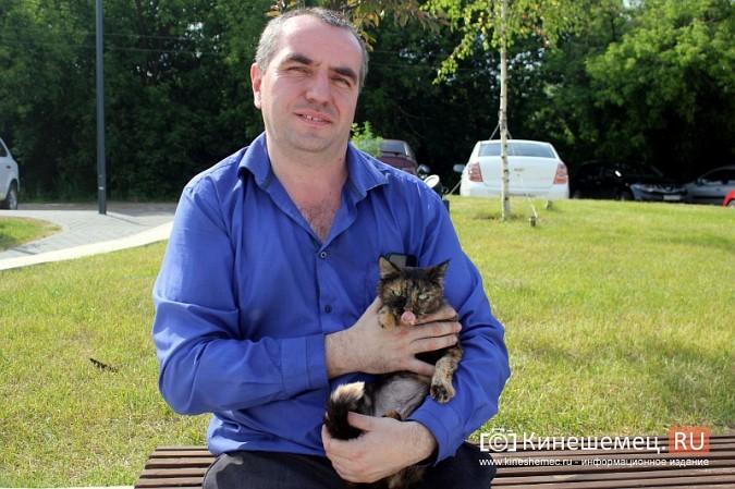 Кинешемский бизнесмен за 800 тысяч рублей пересадил почку любимой кошке фото 5