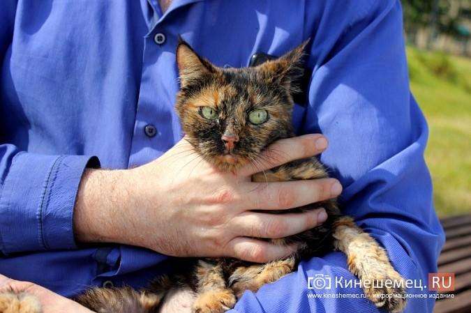 Кинешемский бизнесмен за 800 тысяч рублей пересадил почку любимой кошке фото 6