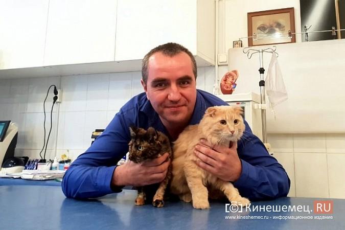 Кинешемский бизнесмен за 800 тысяч рублей пересадил почку любимой кошке фото 3