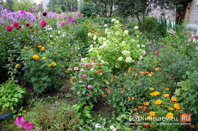 У пятиэтажки на улице Воеводы Боборыкина жители вырастили шикарный цветник фото 12
