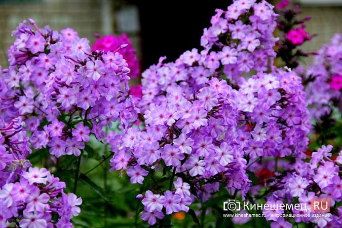 У пятиэтажки на улице Воеводы Боборыкина жители вырастили шикарный цветник фото 30