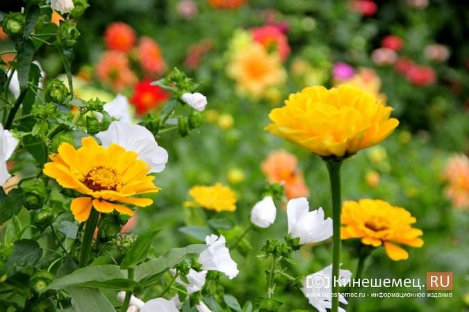 У пятиэтажки на улице Воеводы Боборыкина жители вырастили шикарный цветник фото 26