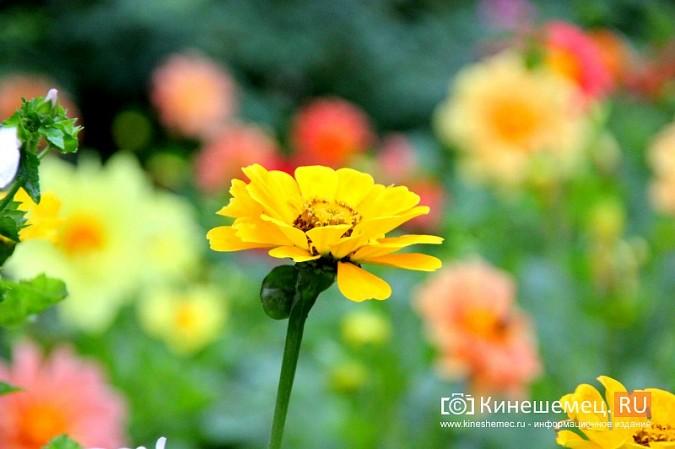 У пятиэтажки на улице Воеводы Боборыкина жители вырастили шикарный цветник фото 27