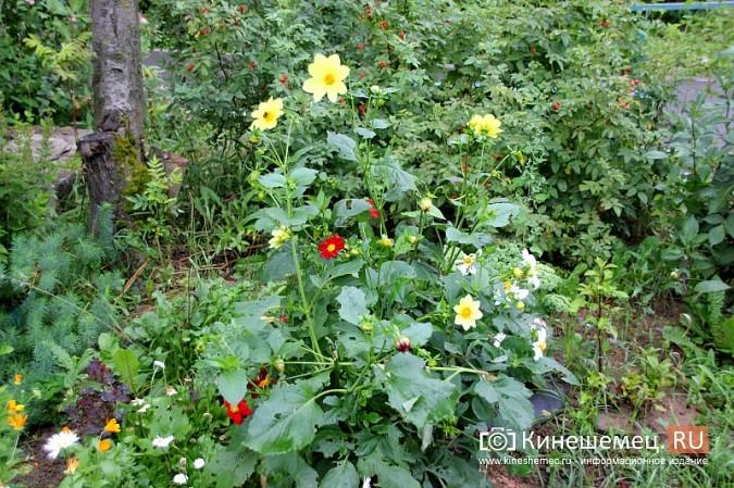 У пятиэтажки на улице Воеводы Боборыкина жители вырастили шикарный цветник фото 5